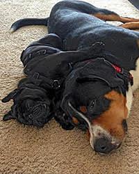 ACIC - personeel - Helpende honden